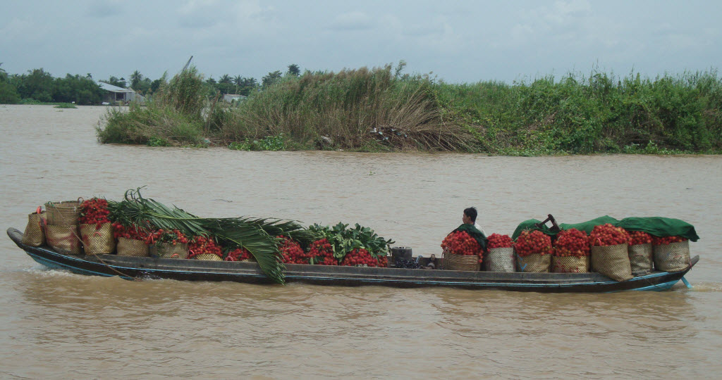 Mekong delta tours CaiBe - fruit transport to CaiBe floating market