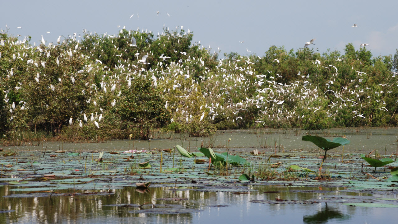 Mekong delta tours to Cambodia - TraSu nature reserve