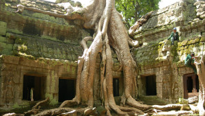 Giant tree in TaProhm temple Angkor