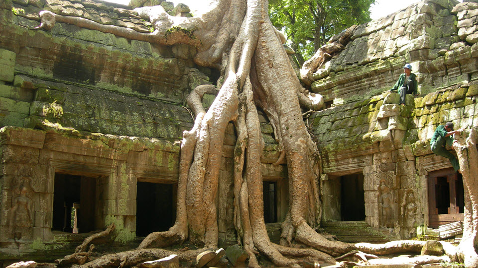 Silk-cotton tree roots in Ta Prohm temple