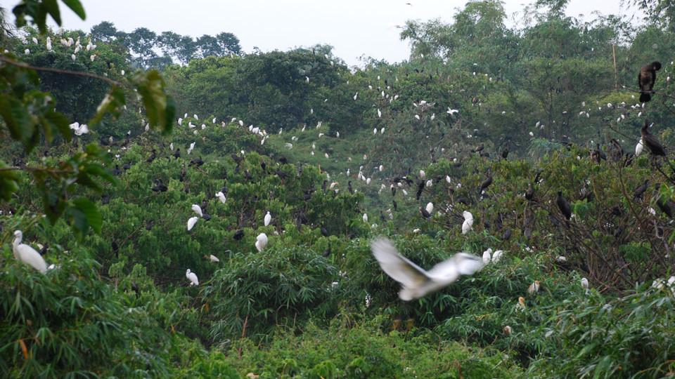 Bang Lang birds garden in ThotNot