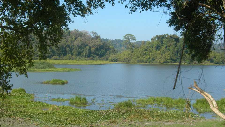 Crocodile swamp - BauSau lake in Cat Tien national park