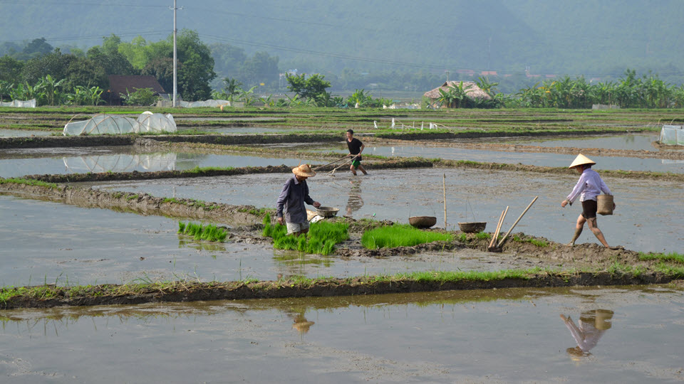 Rice planting in Mai Chau valley