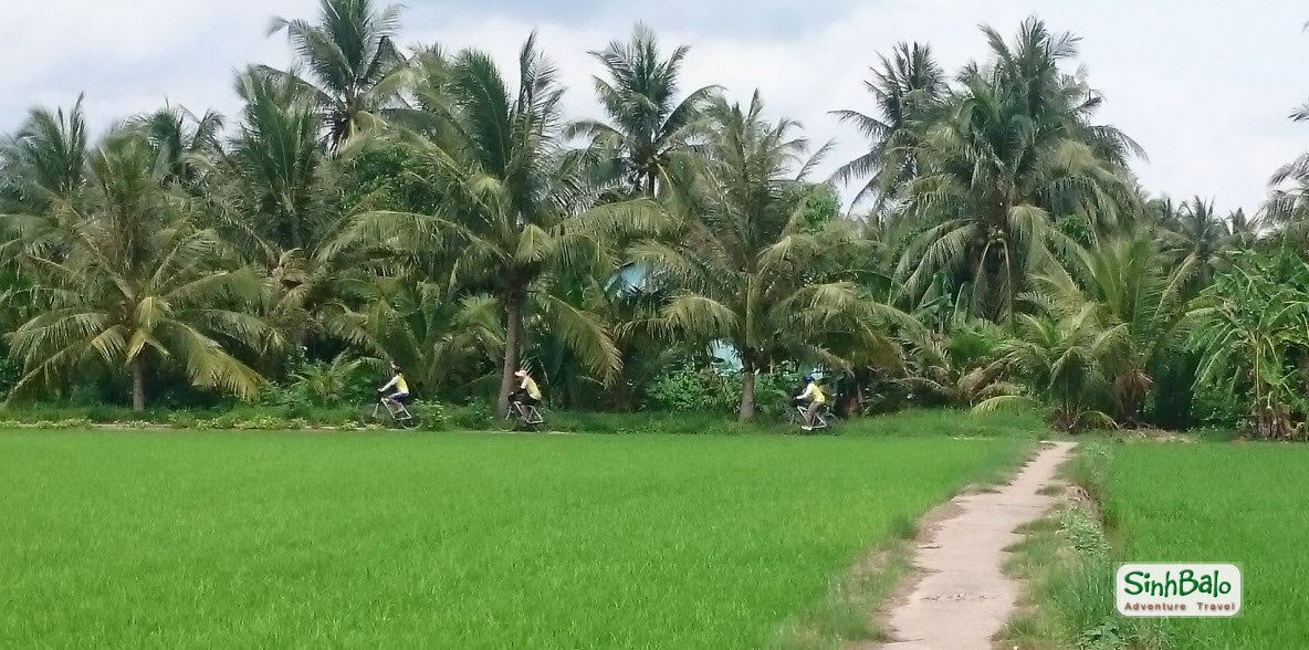 A bike trail through rice paddies - Mekong delta cycling tour 2 days BenTre TraVinh